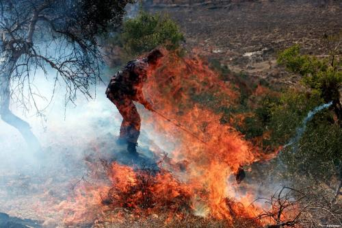 Un vídeo muestra que los colonos de Israel iniciaron los…