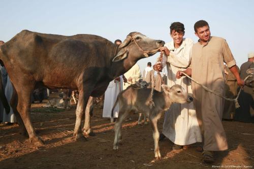 Una organización benéfica turca y una ONG sudafricana distribuyen carne…