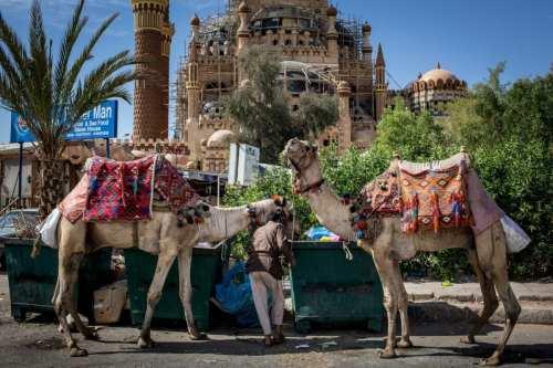 Egipto aspira a obtener unos ingresos por turismo de entre…
