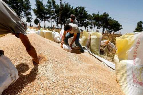 """Siria: La sequía pone en peligro el """"año del trigo""""…"""