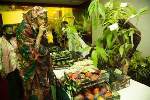 Festival del mango en Sudán
