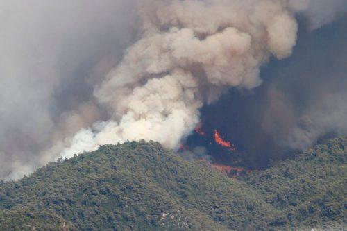 Turquía: 98 incendios forestales masivos están controlados