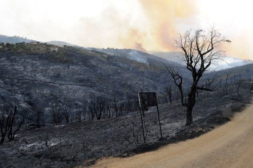 El máximo dirigente del ejército asegura que los incendios forestales…