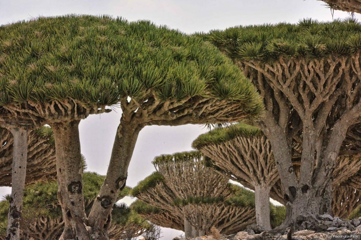 Ilha iemenita de Socotra, 24 de maio de 2018 [Rod Waddington/ Flickr]