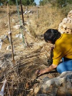 Soraya Misleh em 2010 pegando terra da aldeia Qaqun na Palestina ocupada para levar para ao seu pai [Foto arquivo pessoal]