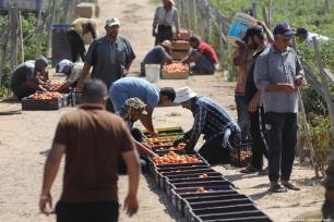 Terras, edifícios e instalações de antigos assentamentos ilegais israelenses, reutilizados para servir aos residentes palestinos de Gaza, em 12 de setembro de 2021 [Mohammad Asad/Agência Anadolu]