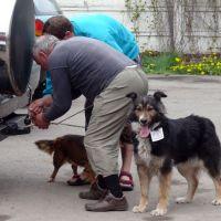 Campanie de sterilizare a câinilor şi pisicilor cu sau fără stăpân