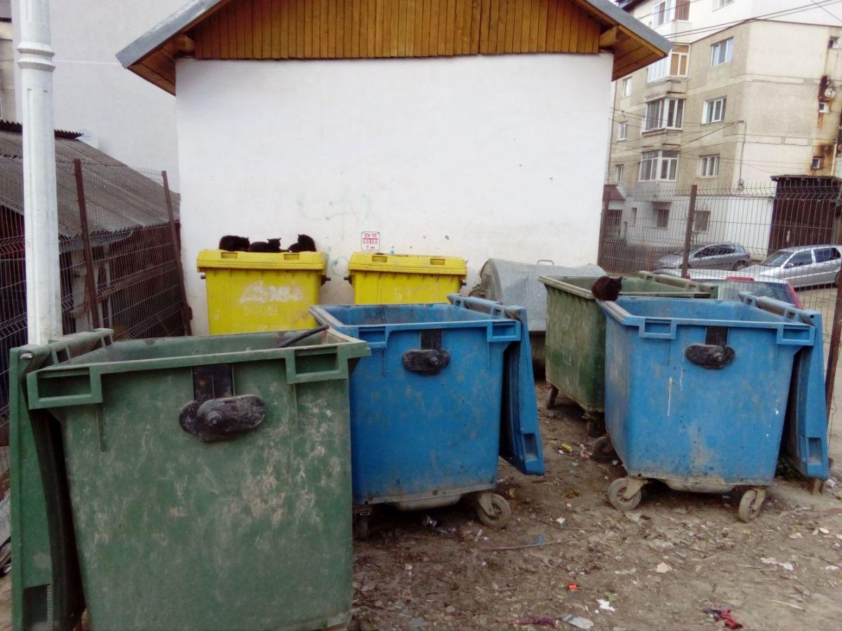 Zona Azurului: parte a cartierului Unirii sau sat al orașului Vatra Dornei?