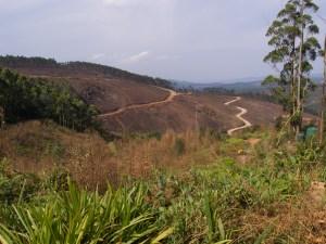 In Norden Swasilands wird viel Holz an- und abgebaut.