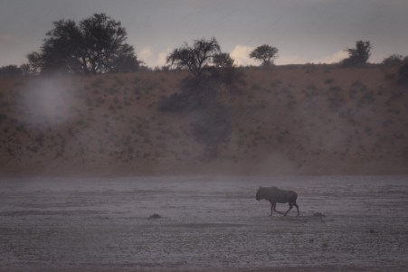 Kaum sind wir im Kgalagadi Nationalpark, empfängt uns ein heftiges Gewitter.