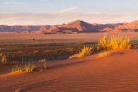 Unweit der Gästefarm Gunsbewys liegen die ersten Sanddünen. Sonst ist kilometerweit kein Mensch und kein Gebäude zu sehen.