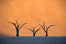 Aufgrund des trockenen Klimas verrotten die abgestorbenen Akazienbäume nur sehr langsam.