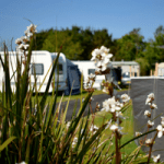 Monkey tree Holiday Park field