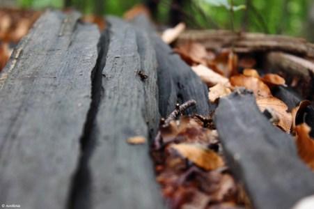 Feldberger Seenlandschaft Spinnennetz