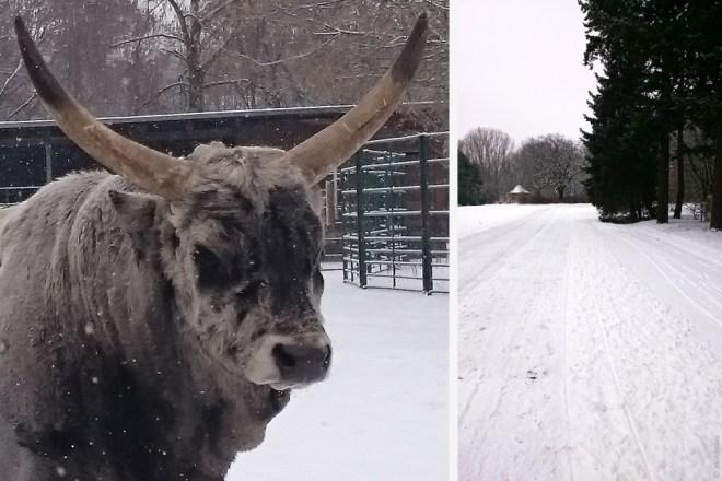 TierparkBerlin Winterspaziergang
