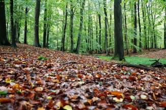 Naturschutzgebiet Hullerbusch