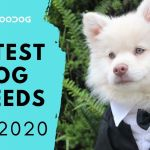 Meet The Cutest Dog Breeds In The World 2020 Monkoodog