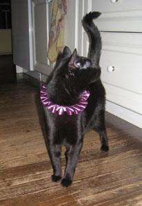 Sasafrass, my sister's cat, modelling her ruffle