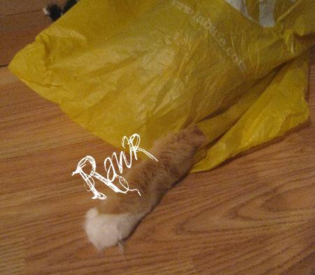 rawr -- cat paw inside a plastic bag