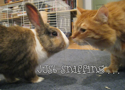 Cat and Bunny sniffing each other
