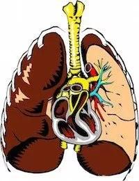 maladies du coeur et du poumon