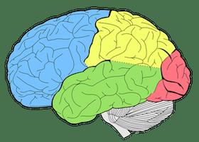Maladies du cerveau
