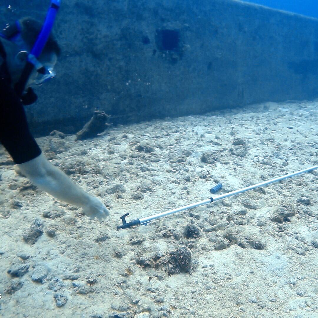 Scuba Diving Cape Eleuthera | Monster Sails