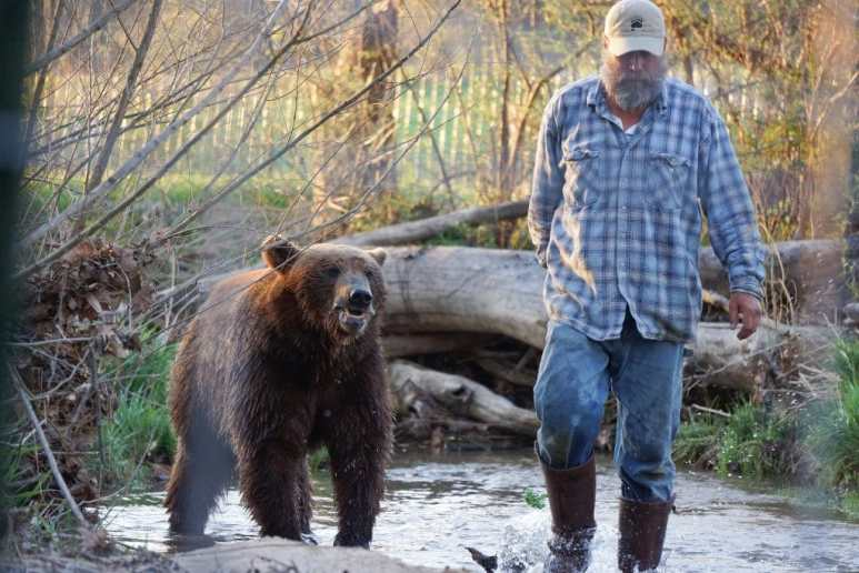 Project Grizzly, Jeff with one of the bears walk on a creek bed