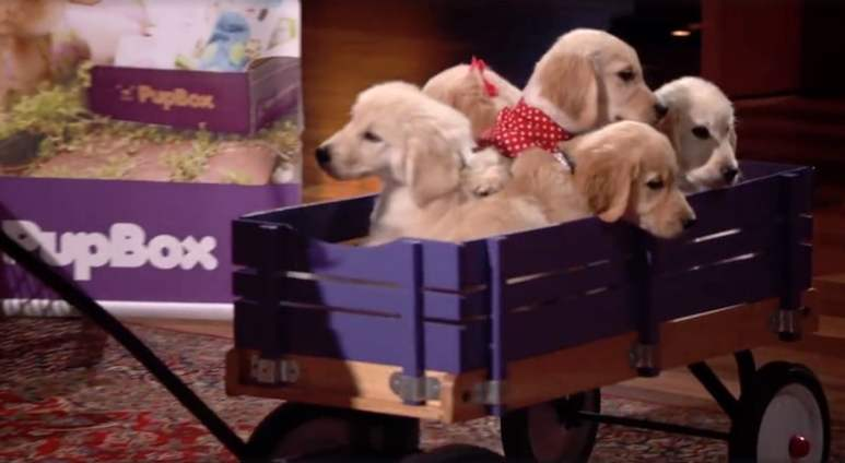 The puppies get wheeled in for the PupBox presentation on Shark Tank