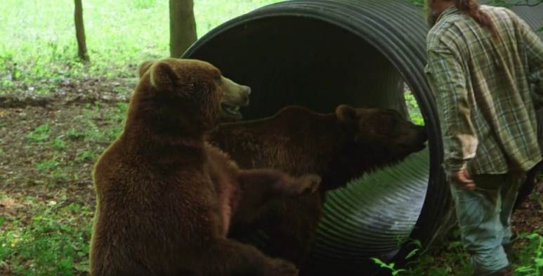 Project Grizzly den building
