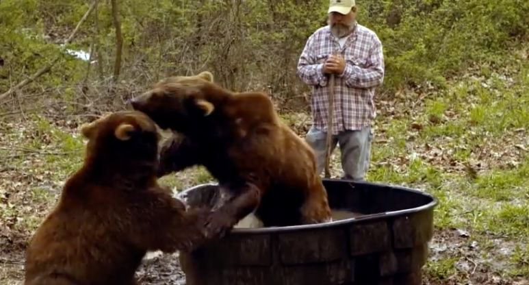 The bears take a bath but it get a bit heated