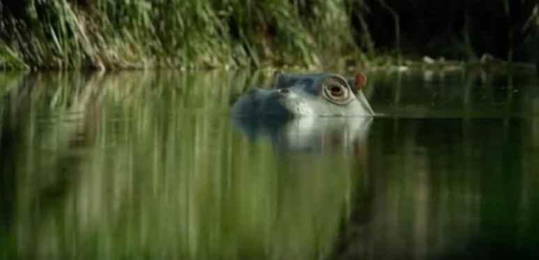 Stealth hippo cam