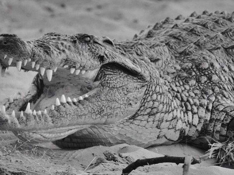 Crocodiles are awful and eat people, what more do you need? Pic credit: Casey Anderson