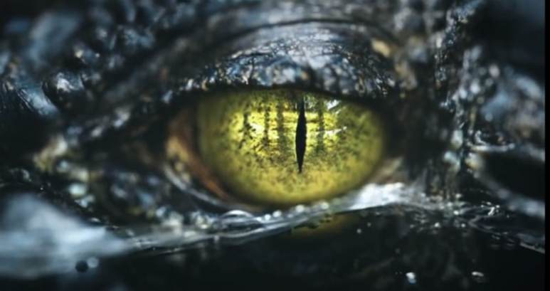 The eye of the alligator from the Swamp People prpmo