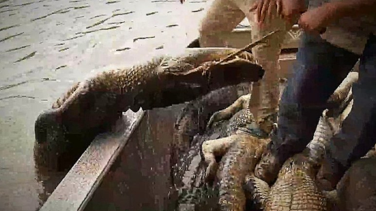 This gator was a fighter but succumbed in the end. Pic credit; History