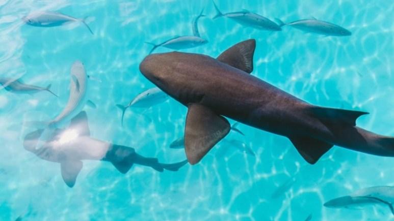 A school of sharks