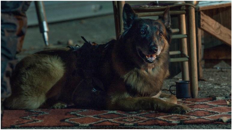 Dog, as seen in Episode 4 of AMC's The Walking Dead Season 11