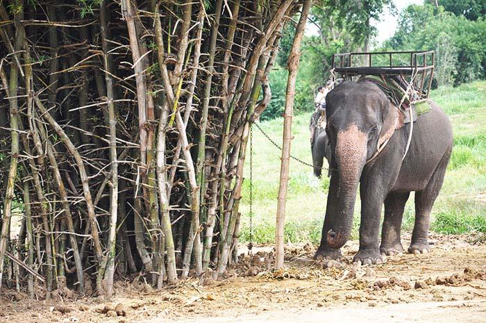 que-ver-kanchanaburi-elefante