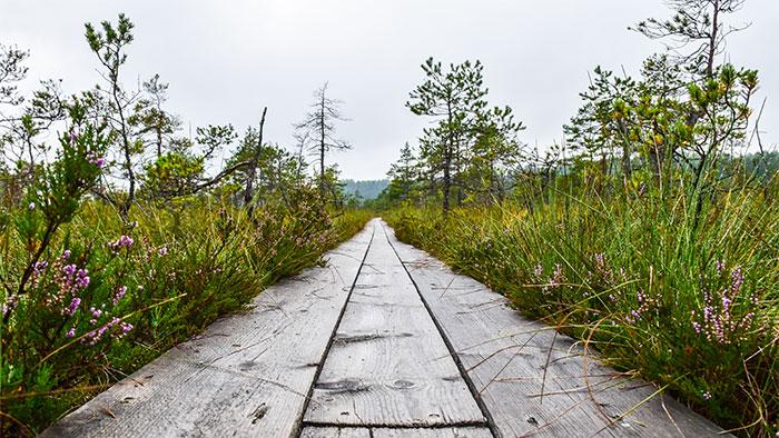 Visitar-Soomaa-National-Park-estonia-camino