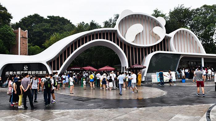 Que-ver-Chengdu-pandas