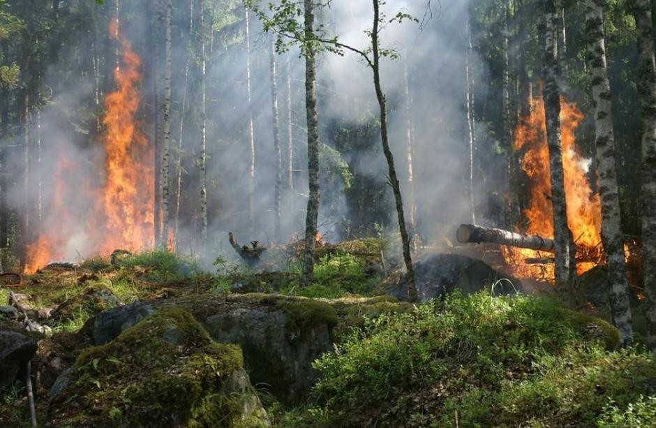 incendi, boschi, valle d'aosta