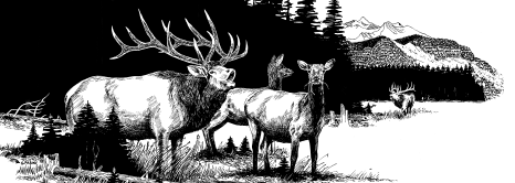 Pen and Ink of Bugling Bull Elk