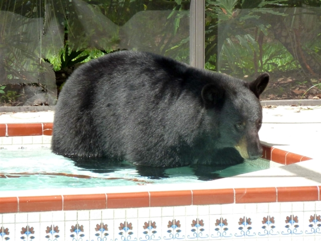 pb-110608-hot-tub-Bear-eg-04.photoblog900