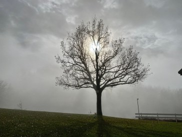 La quercia di Montefenaro