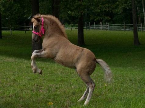 Horses - Coral - 07.25.2009 - 14.52.09