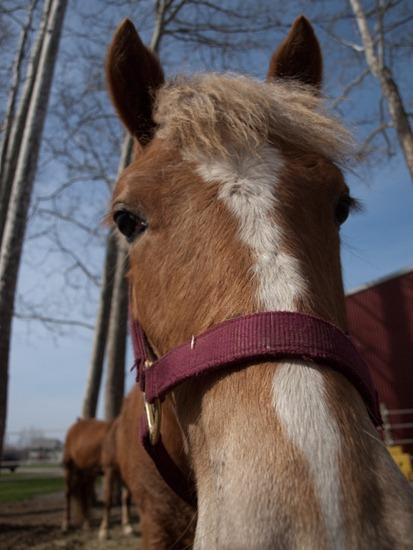 Horses - 04.03.2010 - 08.43.54