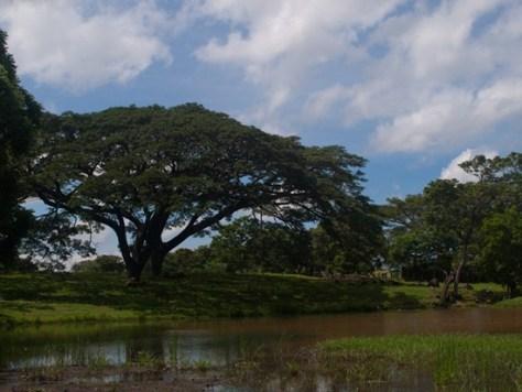 Wetland 1 - Hacienda Jarico - 06.30.2010 - 09.46.59