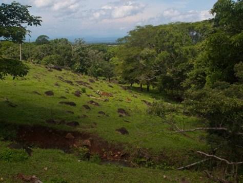 Wetland 1 - Hacienda Jarico - 06.30.2010 - 09.52.51