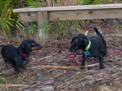 Skidaway with Amos and Eva - 20130111 - 18