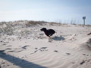 Tybee Island with Amos and Eva - 20130112 - 25